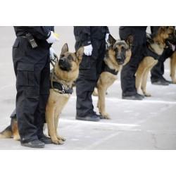 Servicio de vigilancia con perros